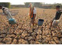 1.963 Desa di 79 Kabupaten Alami Kekeringan, Permintaan Hujan Buatan Meningkat