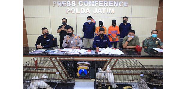 Jual Satwa Dilindungi, Mahasiswa di Sidoarjo dan Pasutri asal Kediri Ditangkap