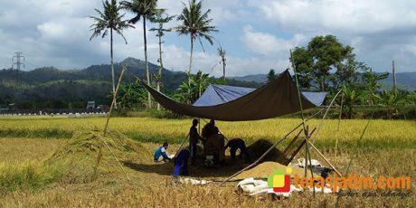 Antisipasi Rawan Pangan, Pemkab Pacitan Targetkan 33 Ton Cadangan Beras