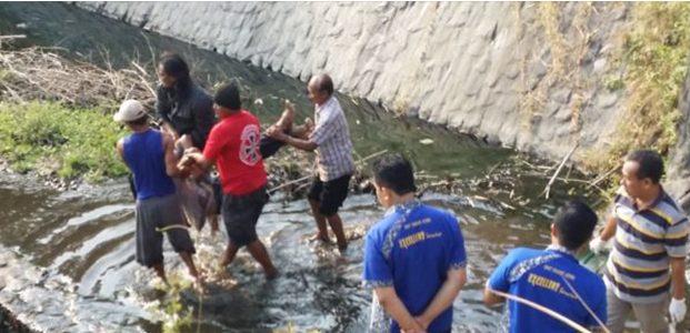 Ayan Kambuh, Pria asal Darungan Pare Ditemukan Tewas di Dam Sungai