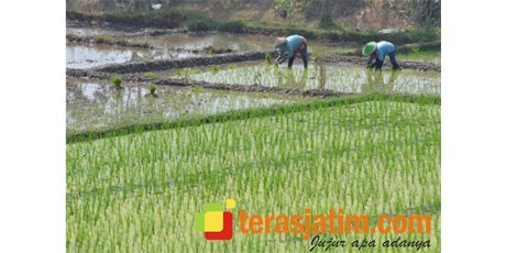 Dinas Pengairan Banyuwangi: Normalisasi dan Rehab Jaringan Penunjang Sektor Pertanian