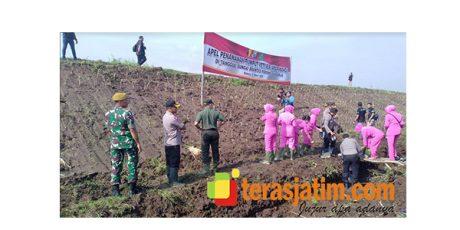 Cegah Longsornya Tanggul, Ribuan Rumput Vetiver Ditanam di Sidoarjo