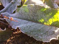 Sejak Minggu Lalu, Kawasan Bromo-Semeru Dilapisi Embun Salju