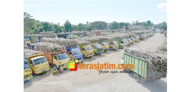 DO Belum Dicairkan Pabrik, Sejumlah Petani Tebu di Situbondo Kesal