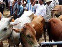 Diduga Pungli, 4 Petugas Pasar Hewan Kaliwungu Tulungagung Terkena OTT