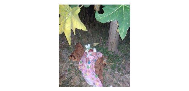 Diduga Sengaja Dibuang, Bayi Perempuan Tergeletak di Bawah Pohon Pepaya