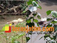 Dilaporkan Hilang, Wanita asal Pandean Sidoarjo Ditemukan Tewas Mengapung di Sungai