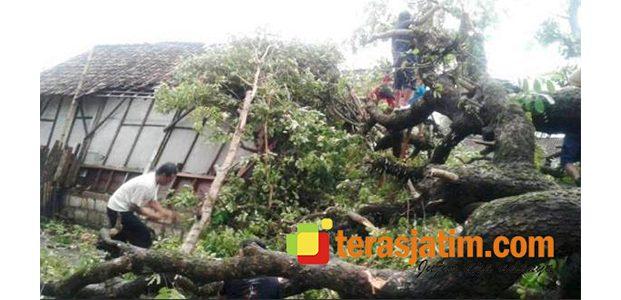 Disapu Angin Kencang, Sejumlah Rumah dan Kandang di Gondang Bojonegoro Rusak