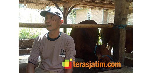 Hanya dari Limbah, Ikhsan Pria Asal Tulakan Pacitan Sukses Kembangkan Peternakan