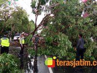 Hujan Disertai Angin, Banyak Pohon di Wilayah Lamongan Tumbang