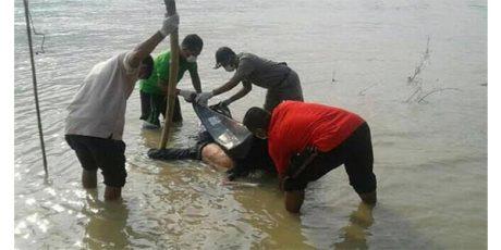 Jasad Pria Yang Lompat dari Jembatan Glendeng Tuban Ditemukan di Kanor