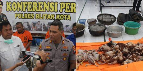 Jual Daging Ayam Tiren, 2 Pria asal Sukorejo Blitar Dibekuk