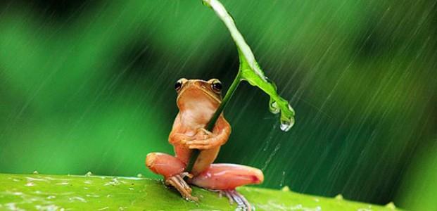 Selamat Datang, Sahabatku Musim Hujan