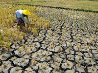 Kekeringan, Lahan 2 Ha Milik Petani Tawangrejo Kota Madiun Gagal Panen