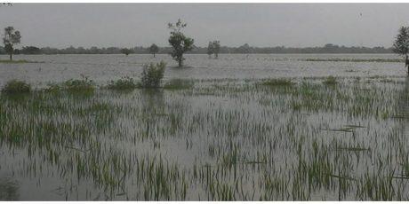 Kerugian Banjir di Kabupaten Madiun Capai Rp54 Miliar
