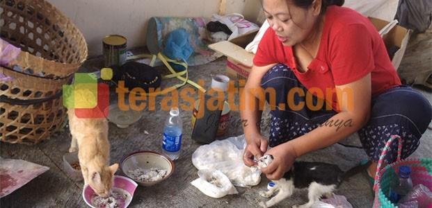Kisah Penyayang Kucing Terlantar