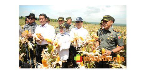 Menteri Pertanian Hadiri Panen Raya Jagung di Modo Lamongan