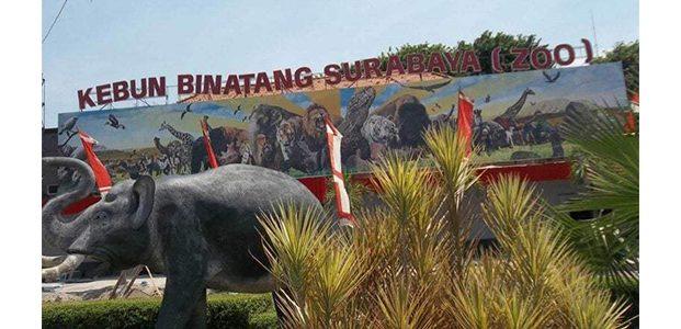 Libur Lebaran, Kebun Binatang Sirabaya Siapkan Aneka Atraksi Satwa dan Kesenian Tradisional