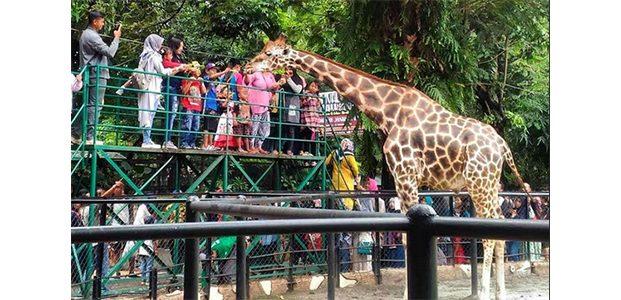 Libur Nataru, Kebun Binatang Surabaya Gelar Sejumlah Acara Festival