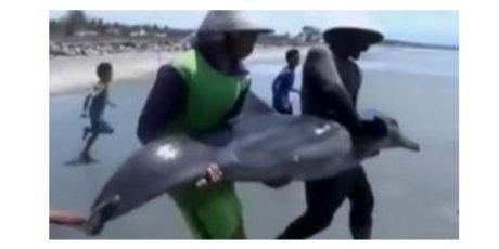 Seekor Lumba-Lumba Terdampar di Pantai Nambangan Surabaya