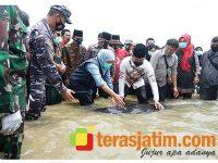 Gubernur dan Bupati Bangkalan Lepas Paus Terdampar di Pesisir Laut Modung