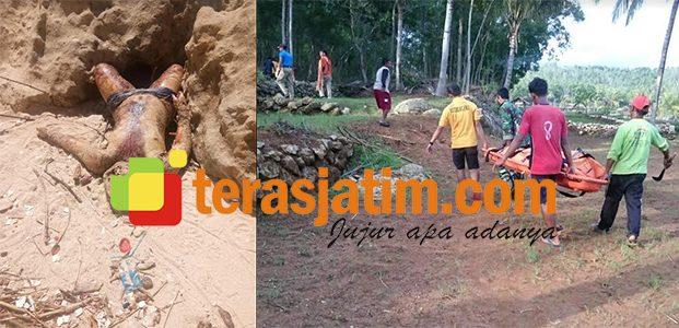 Mayat Tanpa Identitas Ditemukan di Pantai Desa Widoro Pacitan