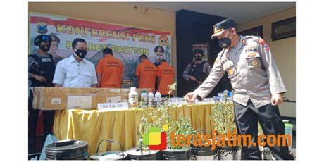 Ganja Hidroponik Beredar di Pacitan, 4 Tersangka Dibekuk Polisi