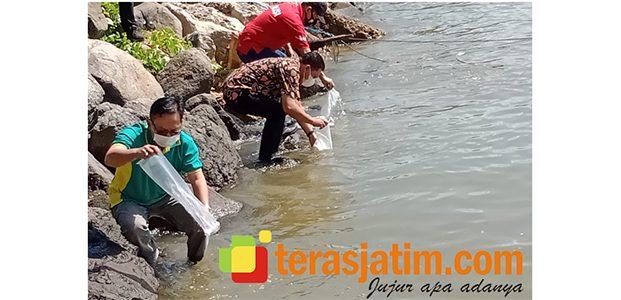 Benih Bening Lobster Boleh Ditangkap, Potensi Lestari Pacitan Lampu Hijau