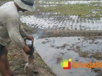 Pasca Diterjang Banjir, Ratusan Hektar Lahan Pertanian Terancam Rusak