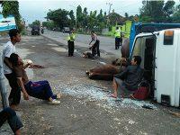 Pecah Ban, Truk Angkut 4 Sapi dan 6 Orang Penumpang Terguling di Widang Tuban