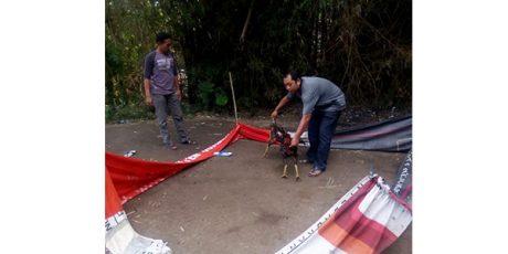 Polisi Akan Buru Pelaku Judi Sabung Ayam di Gudo Jombang