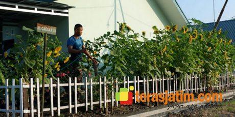 Pratu Gunawan, Prajurit Armed Ngawi Yang Gemar Budidaya Bunga Matahari