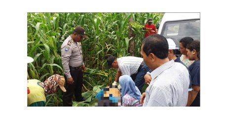 Pria asal Sukosewu Bojonegoro, Ditemukan Tewas di Persawahan