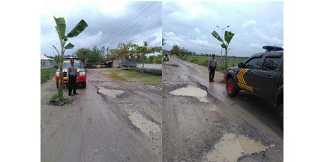 Protes, Warga Gayam Bojonegoro Tanami Jalan Rusak dengan Pohon Pisang