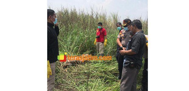 Seorang Mahasiswi di Sidoarjo Ditemukan Tewas Dalam Kondisi Telanjang di Semak-Semak