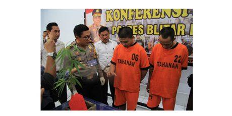 Tanam Ganja, 2 Pemuda di Kota Blitar Dicokok Polisi