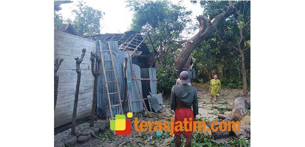 Tertimpa Dahan Pohon, Rumah Warga di Jatibanteng Situbondo Rusak