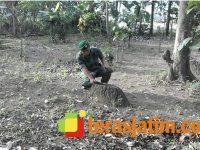 Warga Semanding Kediri Temukan Batu Diduga dari Candi
