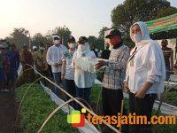 Jadikan Sentra Tembakau, Pemkab Bojonegoro Berikan Bibit ke Petani
