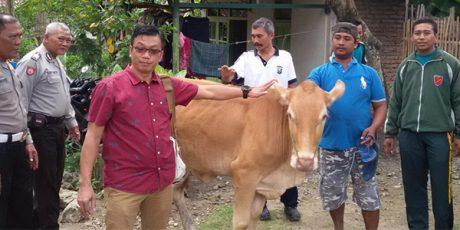 Diduga Curi Sapi Milik Tetangganya, Pria asal Banjarsari Bojonegoro Ditangkap Polisi