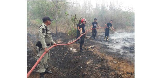 Kebakaran di Panji Situbondo, Anakan Ayam Sekandang Ludes Terbakar
