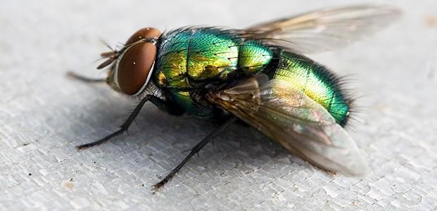 Cara Usir Lalat di Musim Penghujan
