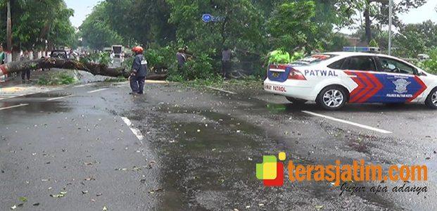 Musim Hujan, Banyak Pohon Tumbang