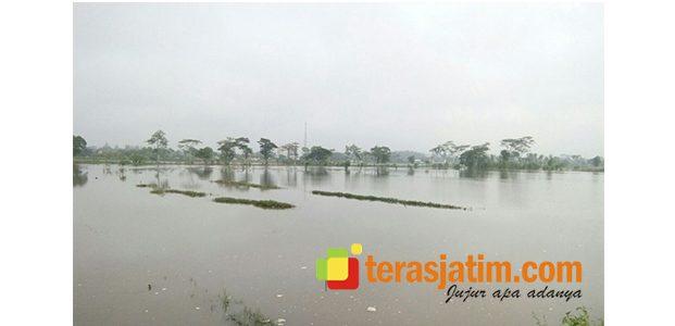 Tangkis di Gampengrejo Kediri Jebol, Puluhan Hektar Padi Kebanjiran