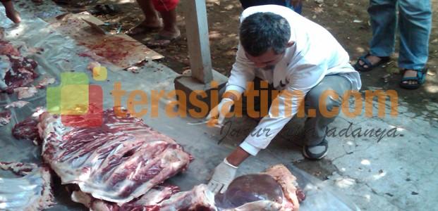Dispertan Kontrol Penyembelihan Hewan Kurban